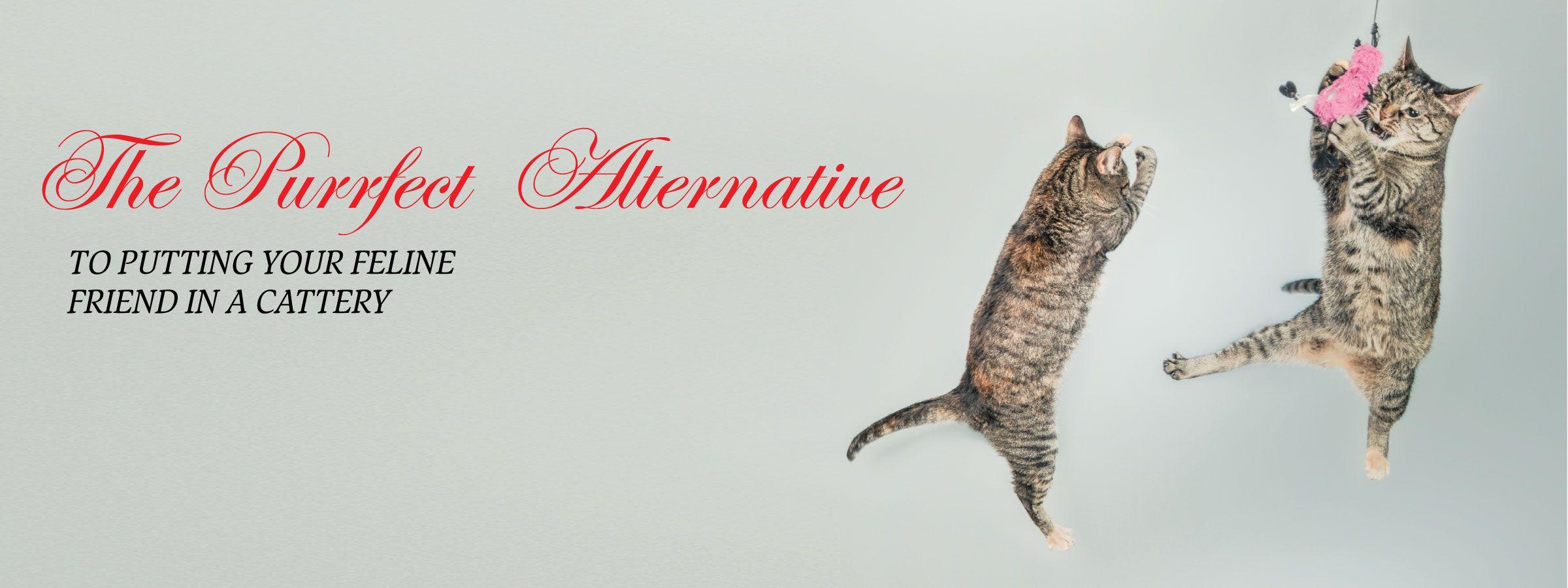 purrfect-alternative