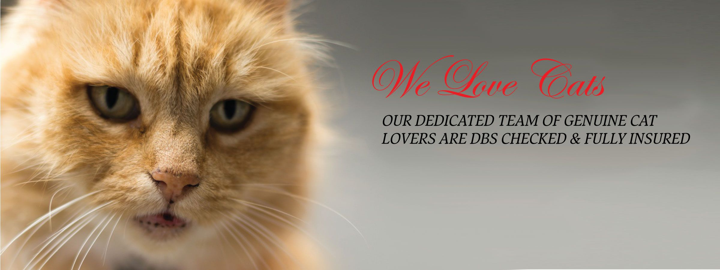 we-love-cats